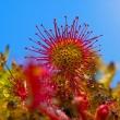 Rośliny, które żywią się owadami