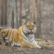 Gatunki zwierząt, które są zagrożone wyginięciem